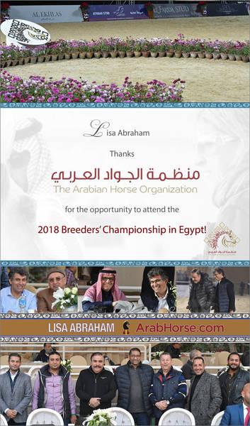 Lisa Abraham THANKS the Arabian Horse Organization!