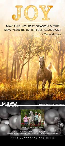 Celebrating with the Worldwide Arabian Horse Community