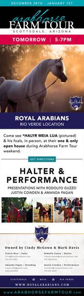 Royal Arabians - TOMORROW ONLY!!!