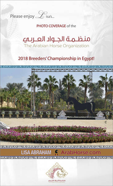 Please enjoy Lisa's PHOTO COVERAGE of the AHO Breeders' Championship in Egypt!