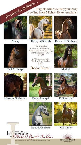 A Rewarding Selection from Michael Byatt Arabians