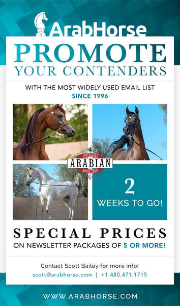 Promote Your Contenders for the Scottsdale Show - 2 Weeks To Go!!