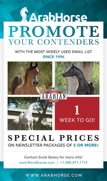 Promote Your Contenders for the Scottsdale Show - 1 Week To Go!!