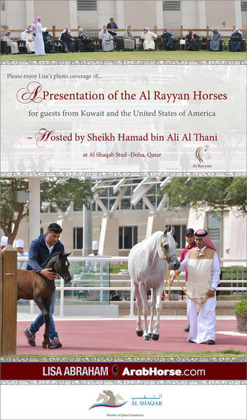 Please enjoy Lisa's photo coverage of an Al Rayyan Presentation of Horses