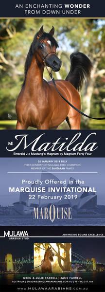 Australian Aspiration | MI MATILDA - Marquise Invitational 2019