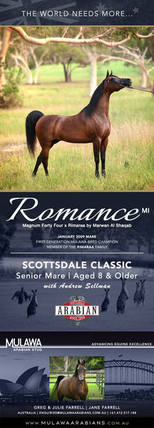 Fall in Love Again at Scottsdale | ROMANCE M