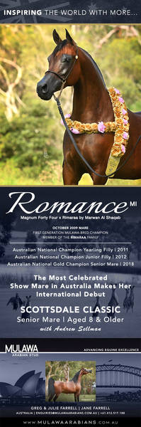 Arabian Aristocracy | Three-Time Australian National Champion ROMANCE MI