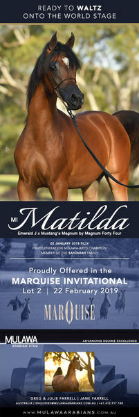 Magnificence in the Making | MI MATILDA - Marquise Invitational 2019