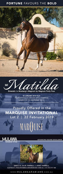 An Extraordinary Opportunity | MI MATILDA - Marquise Invitational 2019