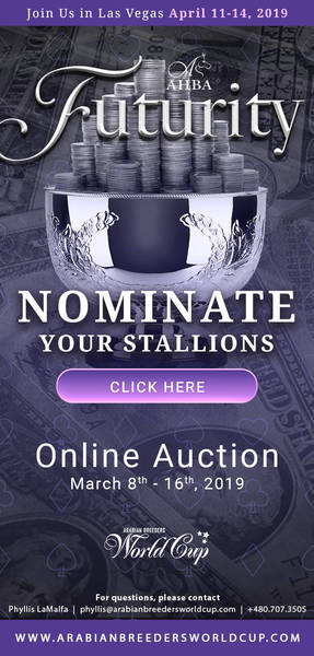 Nominate your Stallion for the 2019 AHBA Futurity Auction (Auction Dates: March 8th to March 16th)