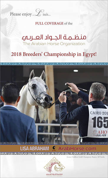 Please enjoy Lisa's FULL COVERAGE of the AHO Breeders' Championship in Egypt!