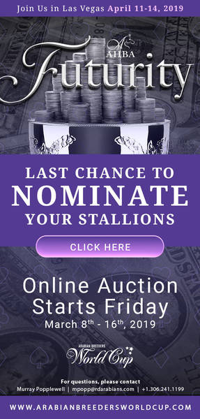 LAST CHANCE to Nominate your Stallion for the 2019 AHBA Futurity Auction