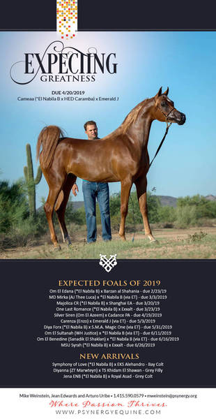 Expecting Greatness | The Foals of Psynergy Equine