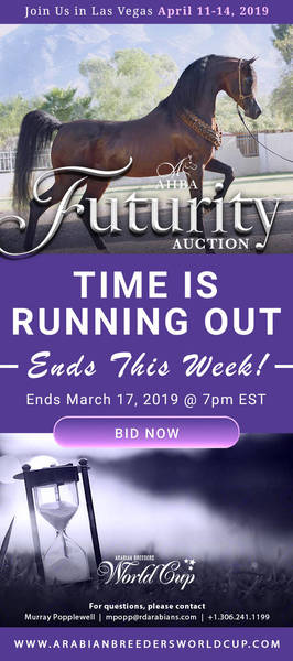 AHBA Futurity Auction..Time is Running Out!