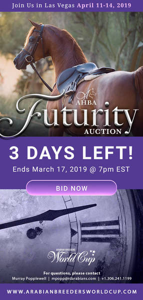 AHBA Futurity Auction..3 days Remaining!