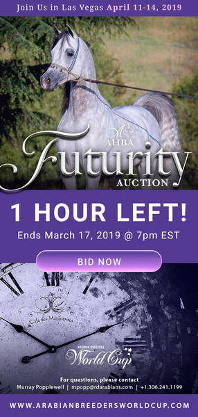 AHBA Futurity Auction.. Ends in 1 Hour!!