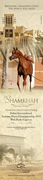 D Shamkhah| Dubai 2019