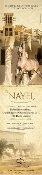 D Nayel| Dubai 2019