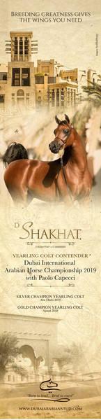 D Shakhat | Dubai 2019