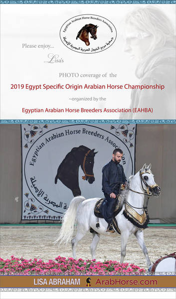 Please enjoy Lisa's PHOTO coverage of the Egypt Specific Origin Arabian Horse Championship...