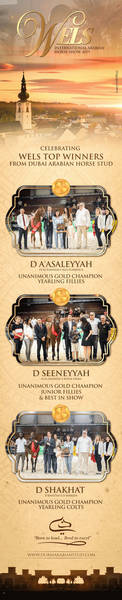 Dubai Arabian Horse Stud | Wels Top Winners