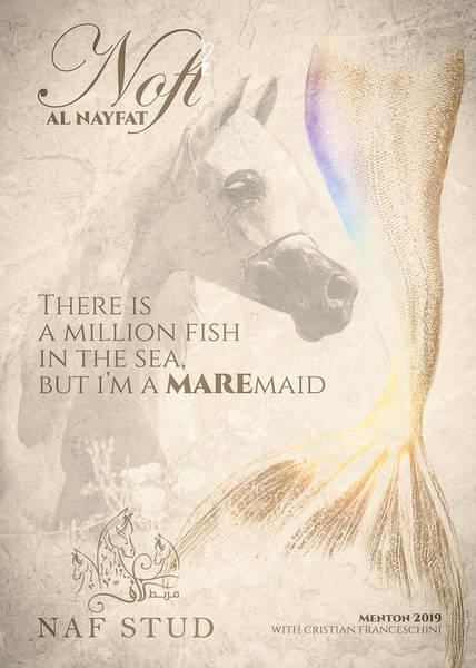 Noft Al Nayfat - senior mare contender Menton 2019