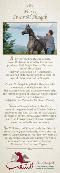 Who is Siwar Al Shaqab