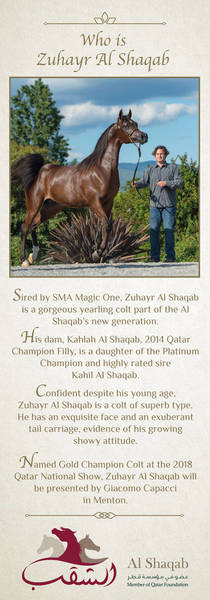Who is Zuhayr Al Shaqab