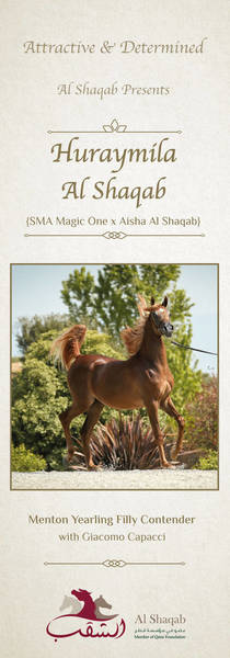 Huraymila Al Shaqab - Menton Yearling Filly Contender with Giacomo Capacci