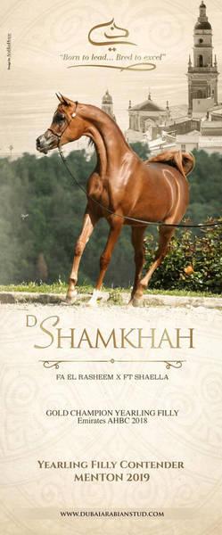 D Shamkhah | Menton 2019 Contender