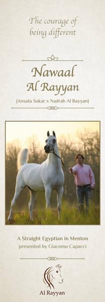 Nawaal Al Rayyan - Menton 2019 Straight Egyptian Contender