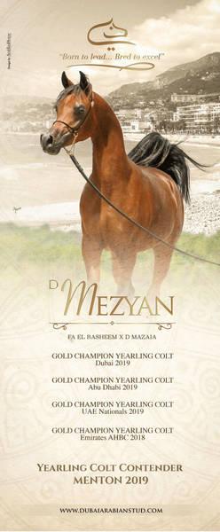 D MEZYAN | Menton 2019 Contender