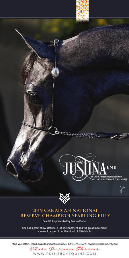 Justina || Canadian Reserve National Champion