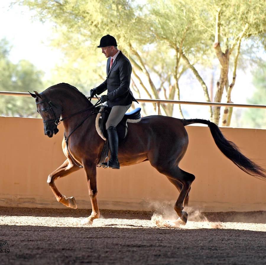 NOVEMBER FEATURED CLIENT - Royal Arabians