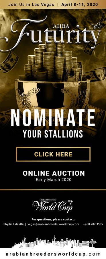Nominate Your Stallions for the 2020 AHBA Futurity Auction (Online Auction: Early March 2020)