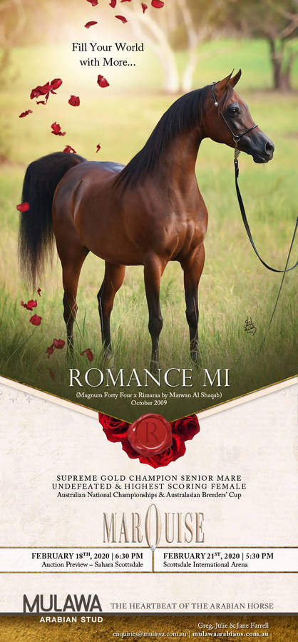The Compelling Power of ROMANCE MI | Marquise Invitational - 21 Feb 2020