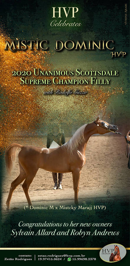 Mistic Dominic HVP - 2020 Scottsdale Supreme Champion Filly