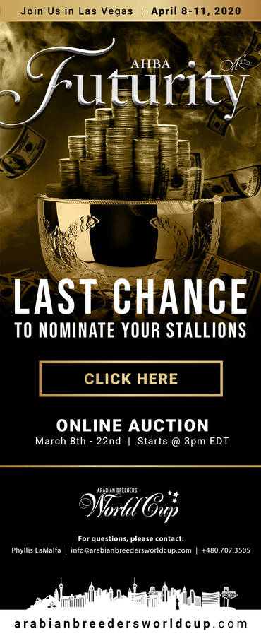 LAST CHANCE to Nominate your Stallion for the 2020 AHBA Futurity Auction