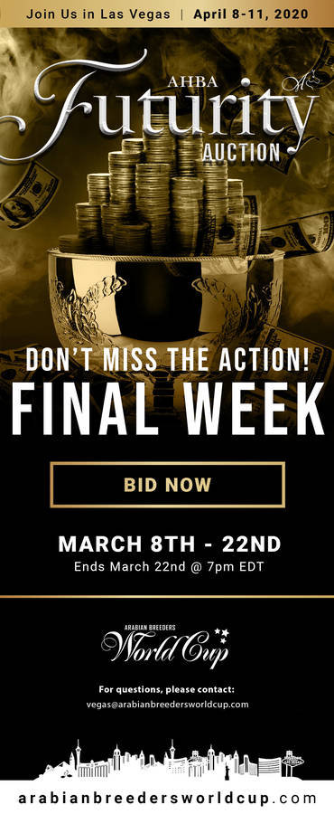 AHBA Futurity Auction...FINAL WEEK