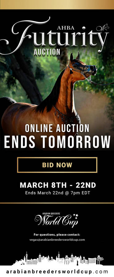 ENDS TOMORROW - 2020 AHBA Futurity Auction