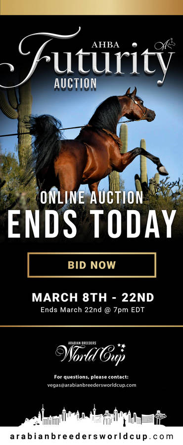 ENDS TODAY - 2020 AHBA Futurity Auction