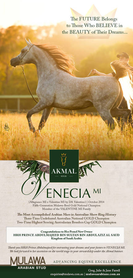 The Royal Ascension of Australia's GOLDEN Girl | VENECIA MI Joins Akmal Stud