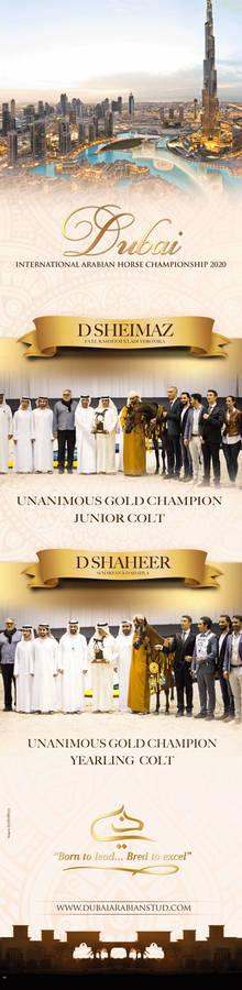 Dubai Arabian Horse Stud Winners | Dubai Show 2020