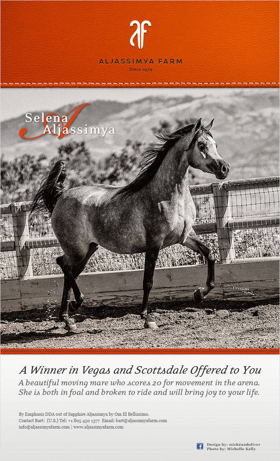 Aljassimya Farm offers a Scottsdale and Vegas winner