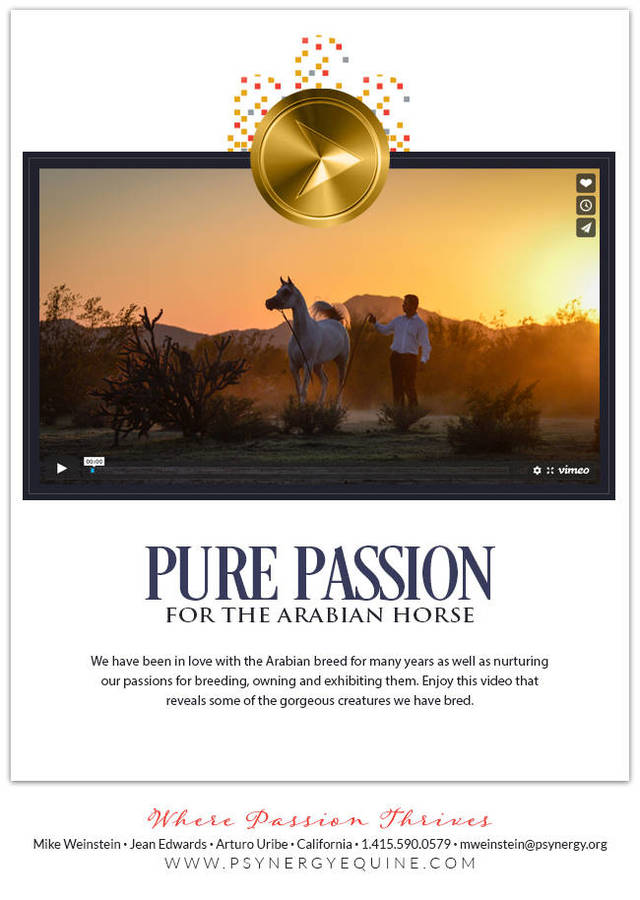 Pure Passion for the Arabian Horse