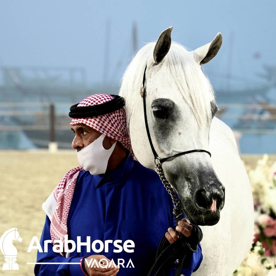 Qualifying Rounds of Katara International Arabian Horse Festival Conclude Successfully
