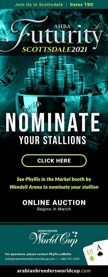 Nominate Your Stallions for the 2021 AHBA Futurity Auction (Online Auction: Begins in March 2021)