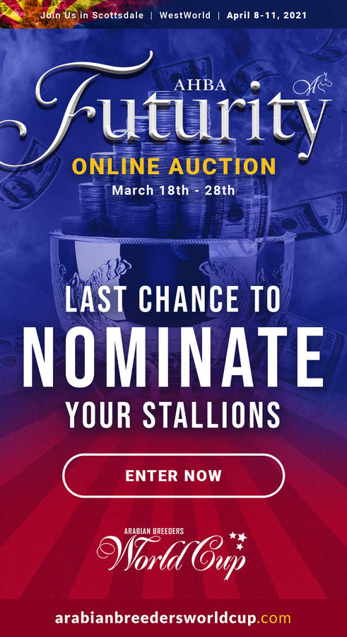 LAST CHANCE to Nominate your Stallions for the 2021 AHBA Futurity Auction