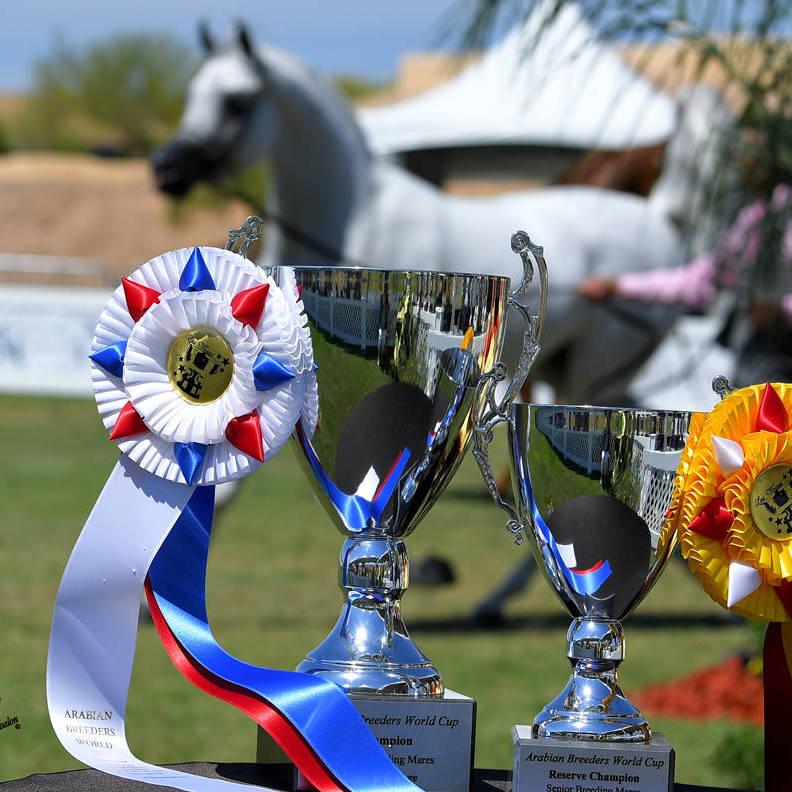 The 2021 Arabian Breeders World Cup - Scottsdale