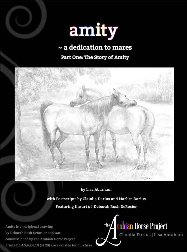The Story of Amity - by The Arabian Horse Project